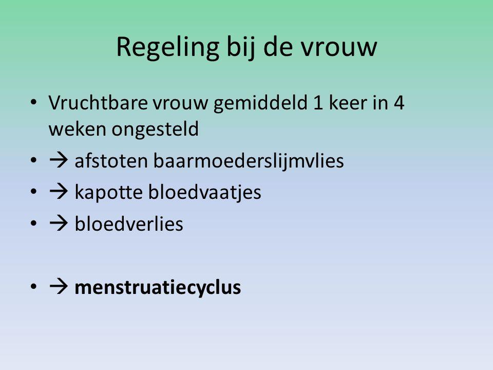 Regeling bij de vrouw • Vruchtbare vrouw gemiddeld 1 keer in 4 weken ongesteld •  afstoten baarmoederslijmvlies •  kapotte bloedvaatjes •  bloedver