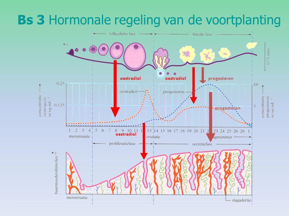 Bs 3Hormonale regeling van de voortplanting oestradiol progesteron oestradiol progesteron