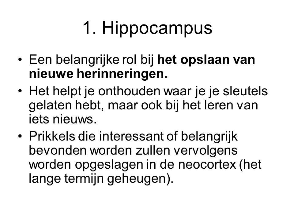 1. Hippocampus •Een belangrijke rol bij het opslaan van nieuwe herinneringen. •Het helpt je onthouden waar je je sleutels gelaten hebt, maar ook bij h