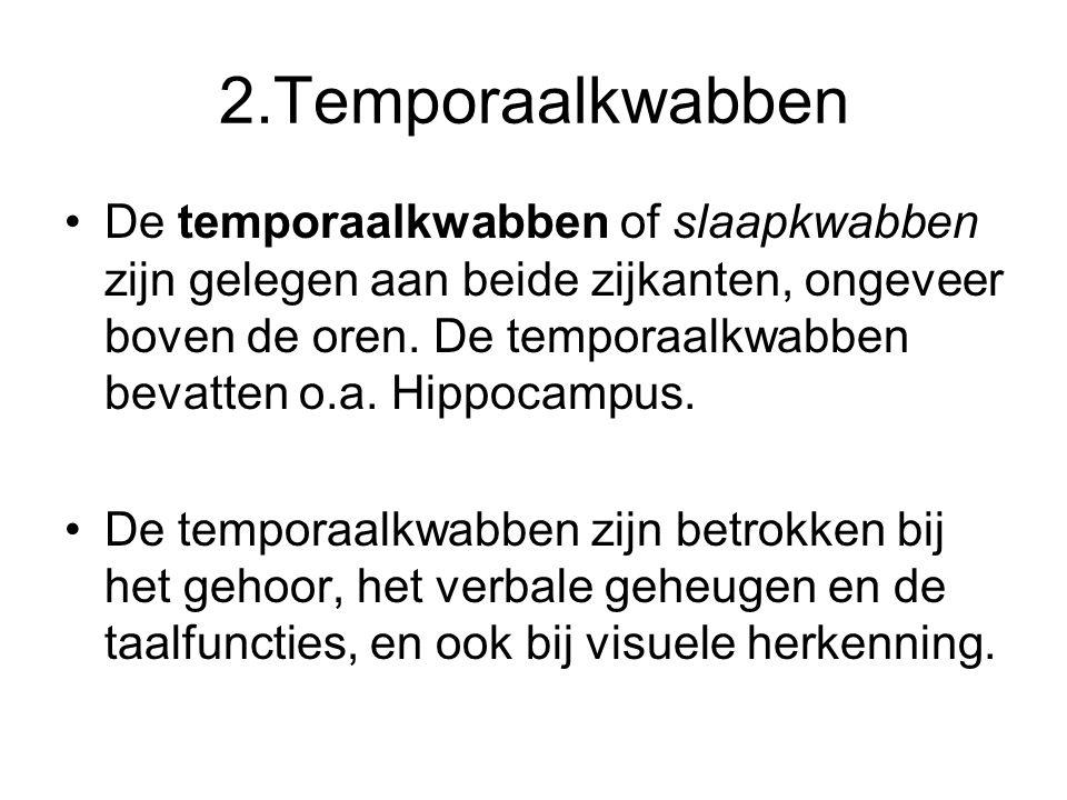 2.Temporaalkwabben •De temporaalkwabben of slaapkwabben zijn gelegen aan beide zijkanten, ongeveer boven de oren. De temporaalkwabben bevatten o.a. Hi