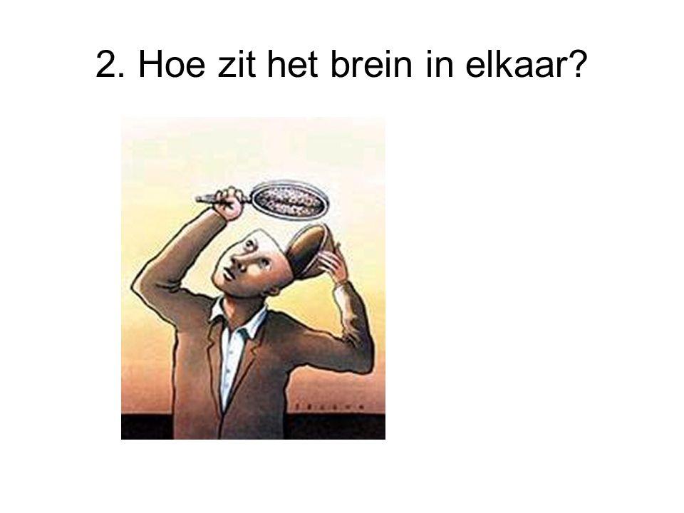 2. Hoe zit het brein in elkaar?