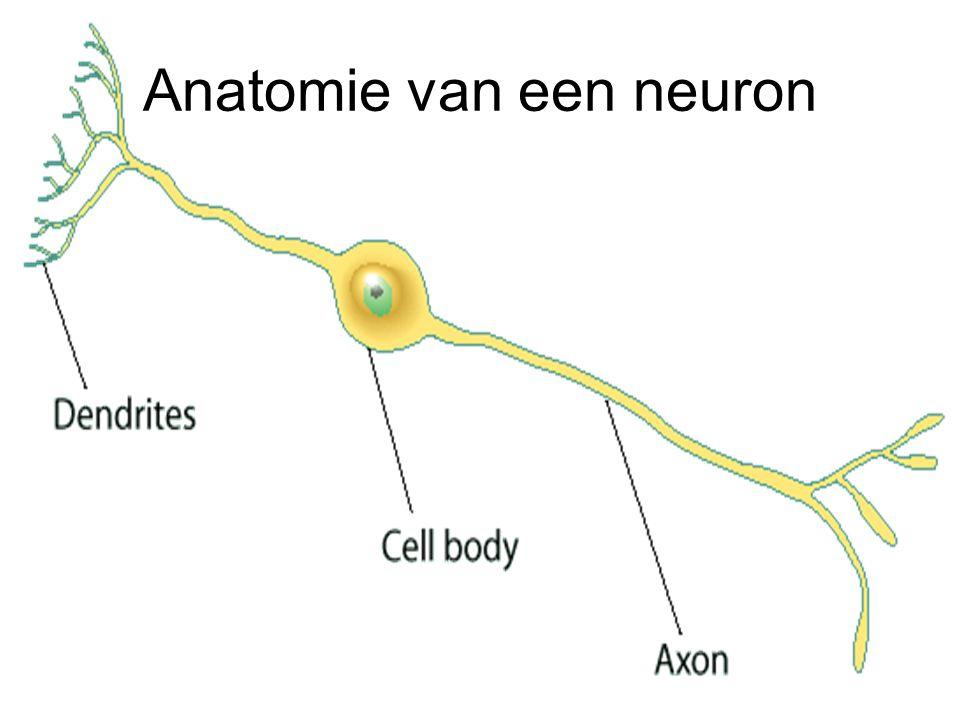 Anatomie van een neuron