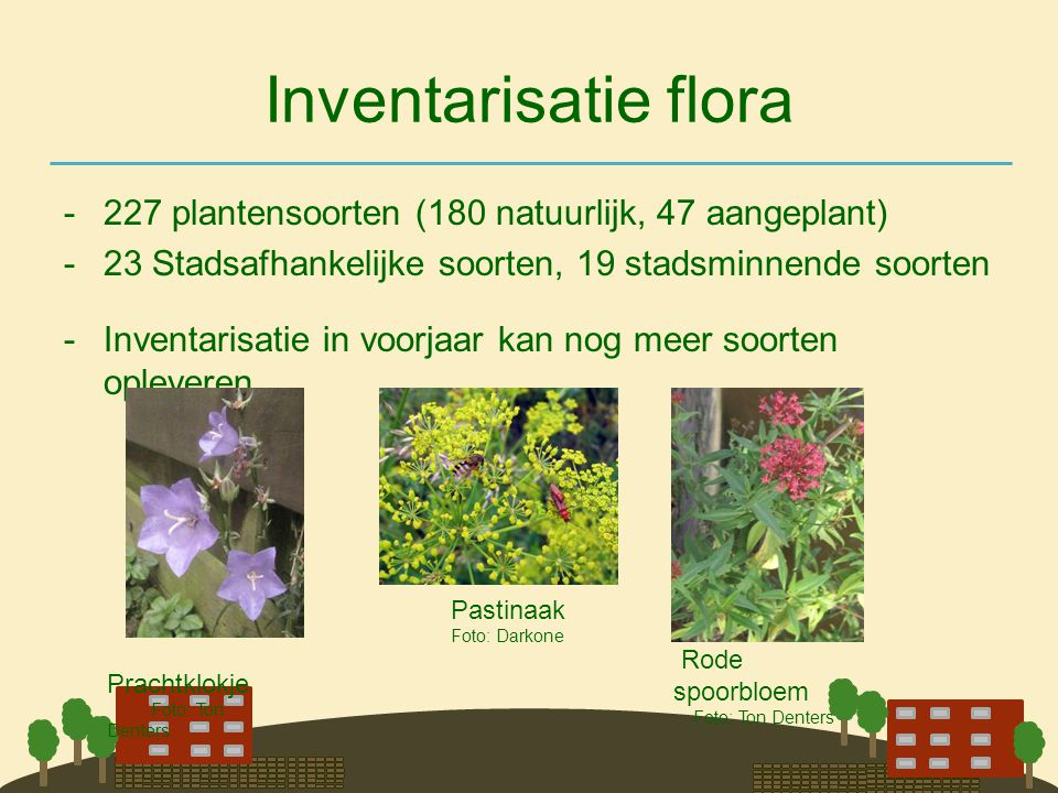 Inventarisatie flora -227 plantensoorten (180 natuurlijk, 47 aangeplant) -23 Stadsafhankelijke soorten, 19 stadsminnende soorten -Inventarisatie in vo