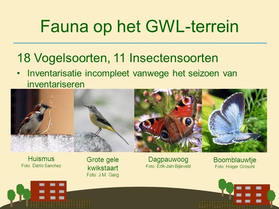 Fauna op het GWL-terrein 18 Vogelsoorten, 11 Insectensoorten •Inventarisatie incompleet vanwege het seizoen van inventariseren Dagpauwoog Foto: Erik-J