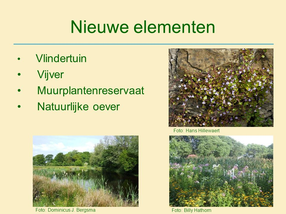 Nieuwe elementen • Vlindertuin • Vijver • Muurplantenreservaat • Natuurlijke oever Foto: Hans Hillewaert Foto: Billy Hathorn Foto: Dominicus J. Bergsm