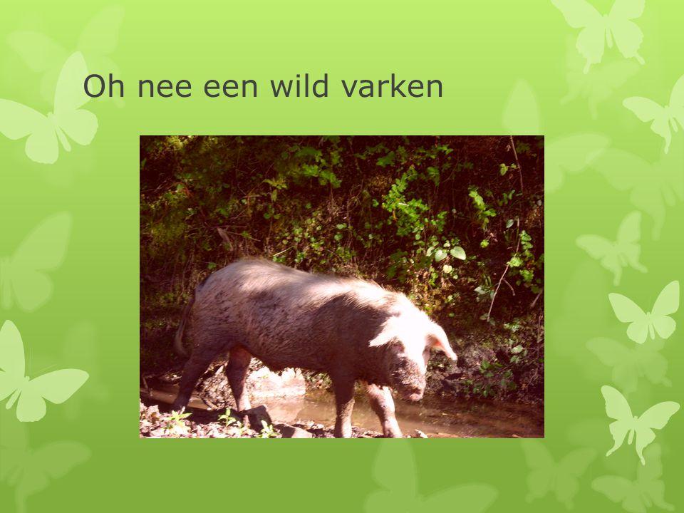 Oh nee een wild varken