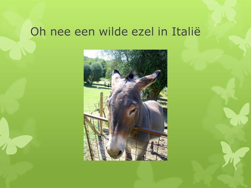 Oh nee een wilde ezel in Italië