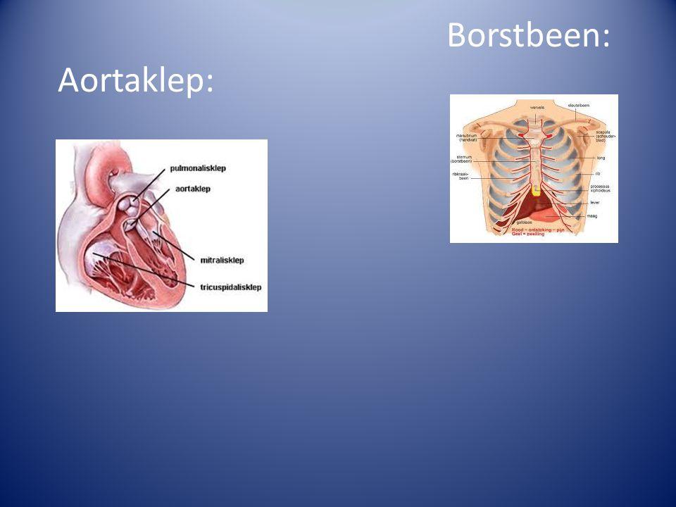 Borstbeen: Aortaklep: