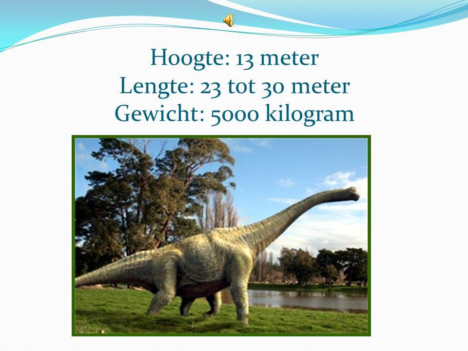 De Brachiosaurus Uitspraak: bra-chie-joo-SAU-rus Betekenis: arm-reptiel Ontdekker: Elmer S. Riggs Ontdekt: in 1883
