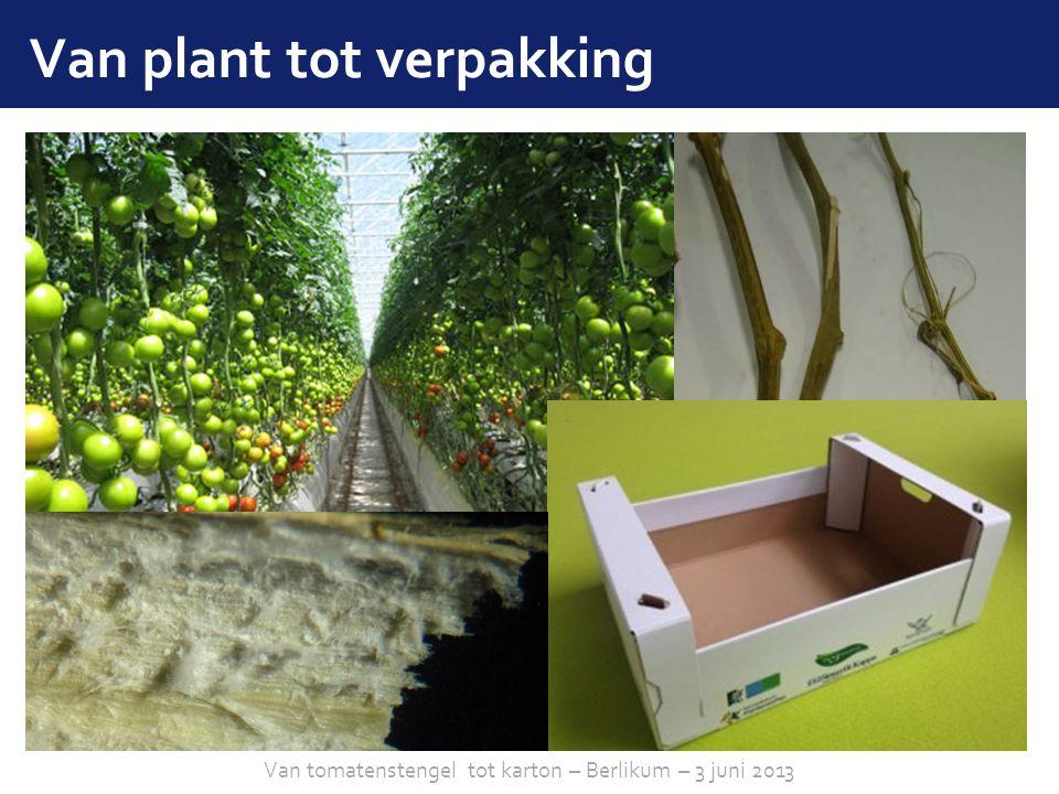 sheet 2 Van plant tot verpakking Van tomatenstengel tot karton – Berlikum – 3 juni 2013
