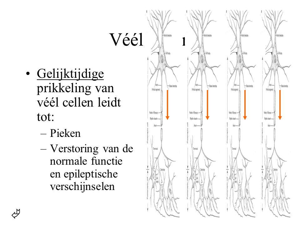 Véél cellen  •Gelijktijdige prikkeling van véél cellen leidt tot: –Pieken –Verstoring van de normale functie en epileptische verschijnselen