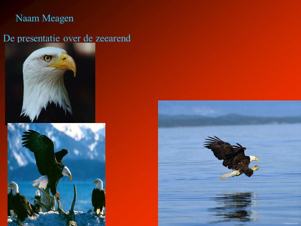 De presentatie over de zeearend Naam Meagen