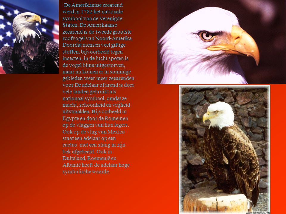 De Amerikaanse zeearend werd in 1782 het nationale symbool van de Verenigde Staten. De Amerikaanse zeearend is de tweede grootste roofvogel van Noord-