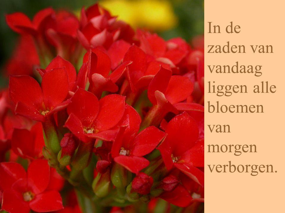 In de zaden van vandaag liggen alle bloemen van morgen verborgen.