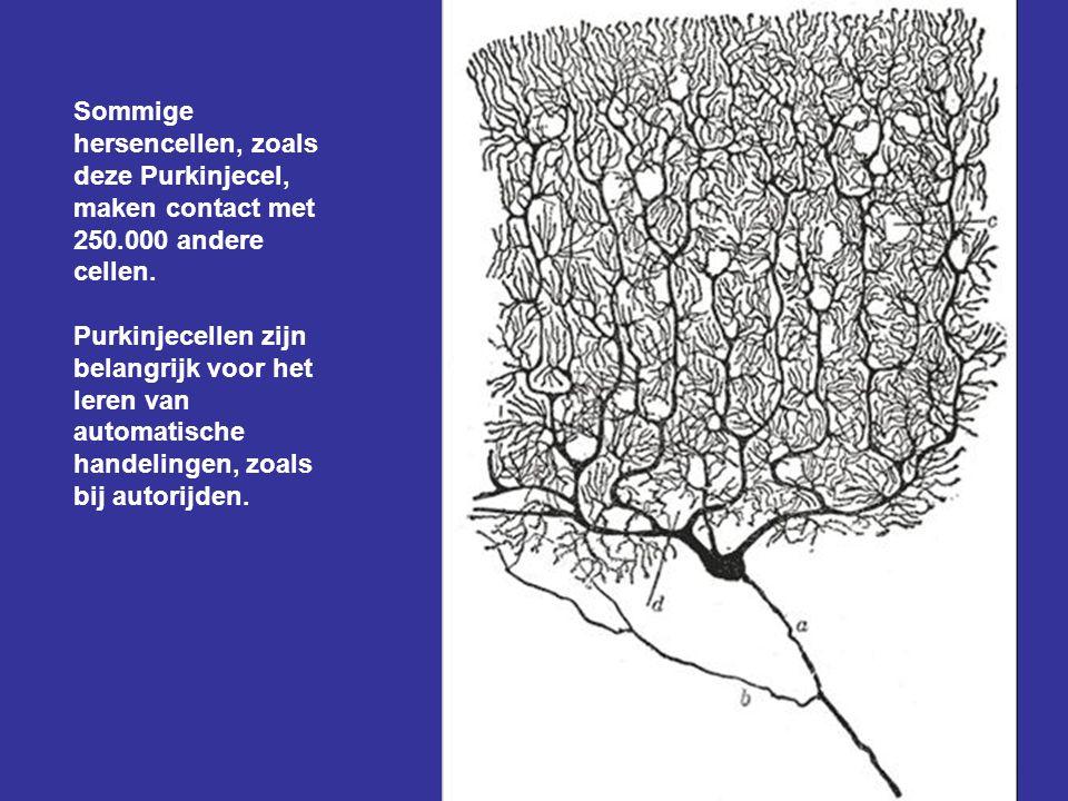 Onze hersenen bestaan uit 100 miljard hersencellen, die elk gemiddeld met duizend andere hersencellen verbonden zijn. In ons hoofd bevinden zich dus h