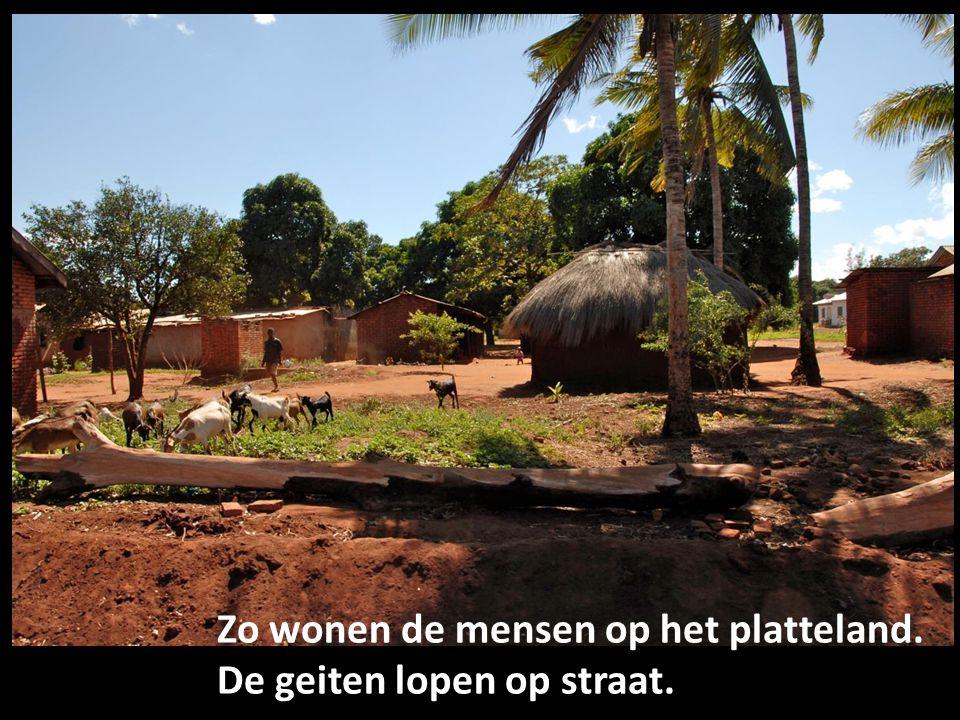 Zo wonen de mensen op het platteland. De geiten lopen op straat.