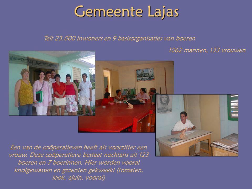Gemeente Lajas Telt 23.000 inwoners en 9 basisorganisaties van boeren 1062 mannen, 133 vrouwen Een van de coöperatieven heeft als voorzitter een vrouw.