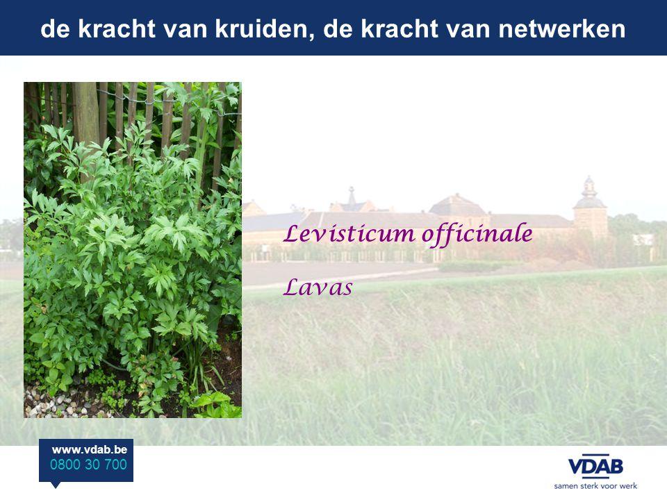 de kracht van kruiden, de kracht van netwerken www.vdab.be 0800 30 700 Levisticum officinale Lavas