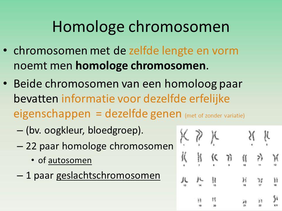 Homologe chromosomen • chromosomen met de zelfde lengte en vorm noemt men homologe chromosomen.