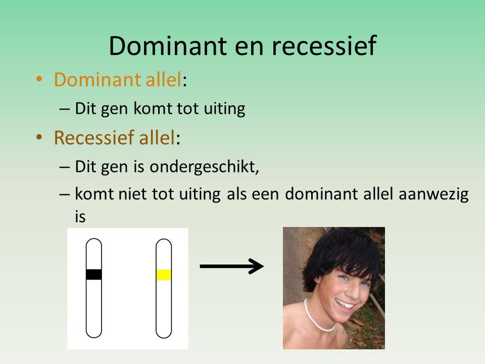 Dominant en recessief • Dominant allel: – Dit gen komt tot uiting • Recessief allel: – Dit gen is ondergeschikt, – komt niet tot uiting als een dominant allel aanwezig is