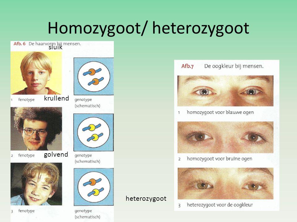 Homozygoot/ heterozygoot heterozygoot sluik krullend golvend