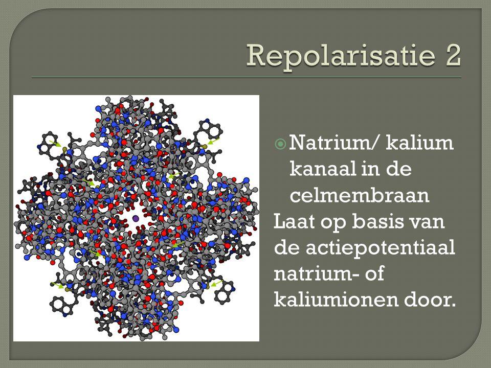  Natrium/ kalium kanaal in de celmembraan Laat op basis van de actiepotentiaal natrium- of kaliumionen door.