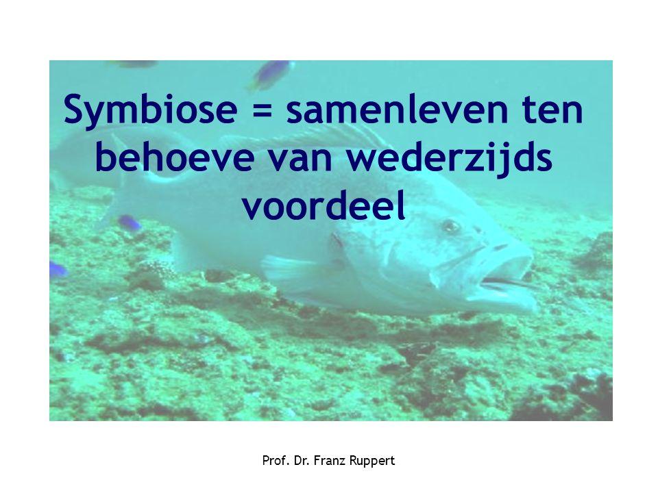 Prof. Dr. Franz Ruppert Symbiose = samenleven ten behoeve van wederzijds voordeel