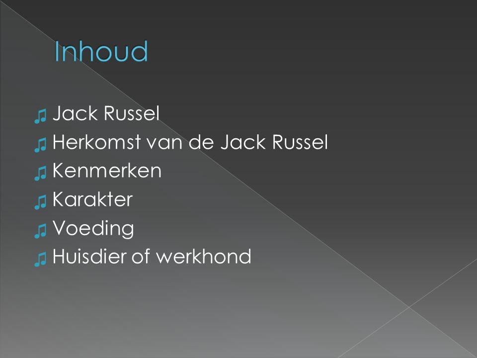 ♫ Jack Russel terriër ♫ Huishond