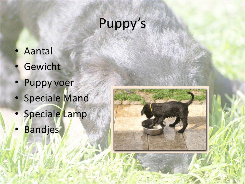 Puppy's • Aantal • Gewicht • Puppy voer • Speciale Mand • Speciale Lamp • Bandjes