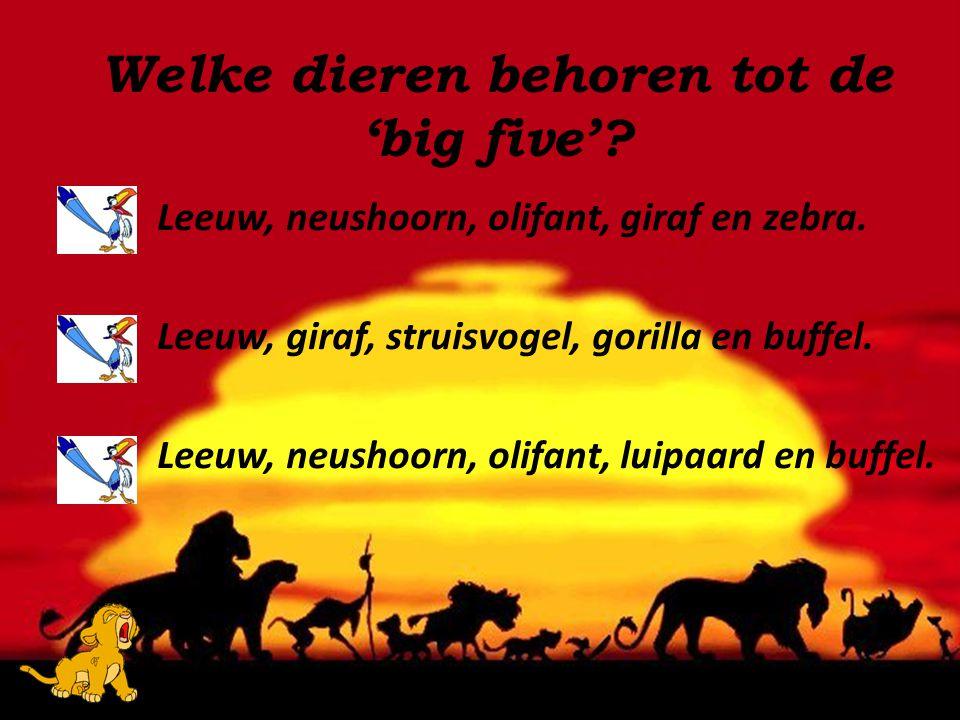 Leeuw, neushoorn, olifant, giraf en zebra. Leeuw, giraf, struisvogel, gorilla en buffel. Leeuw, neushoorn, olifant, luipaard en buffel. Welke dieren b