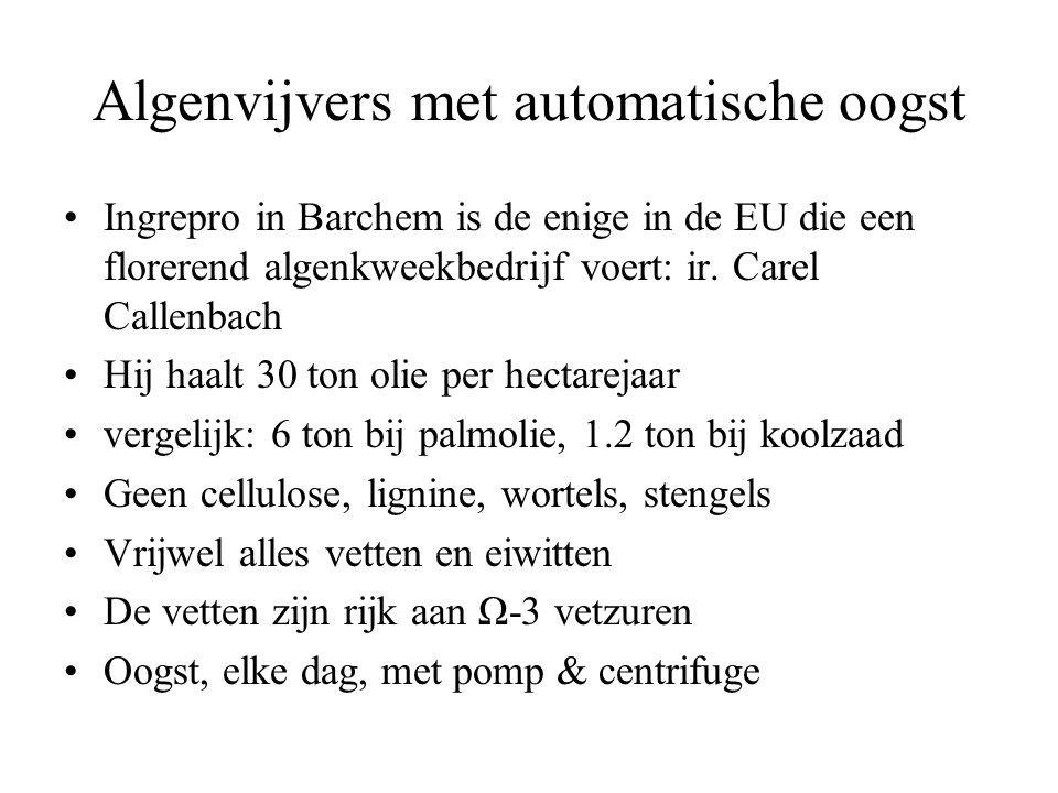 Algenvijvers met automatische oogst •Ingrepro in Barchem is de enige in de EU die een florerend algenkweekbedrijf voert: ir.