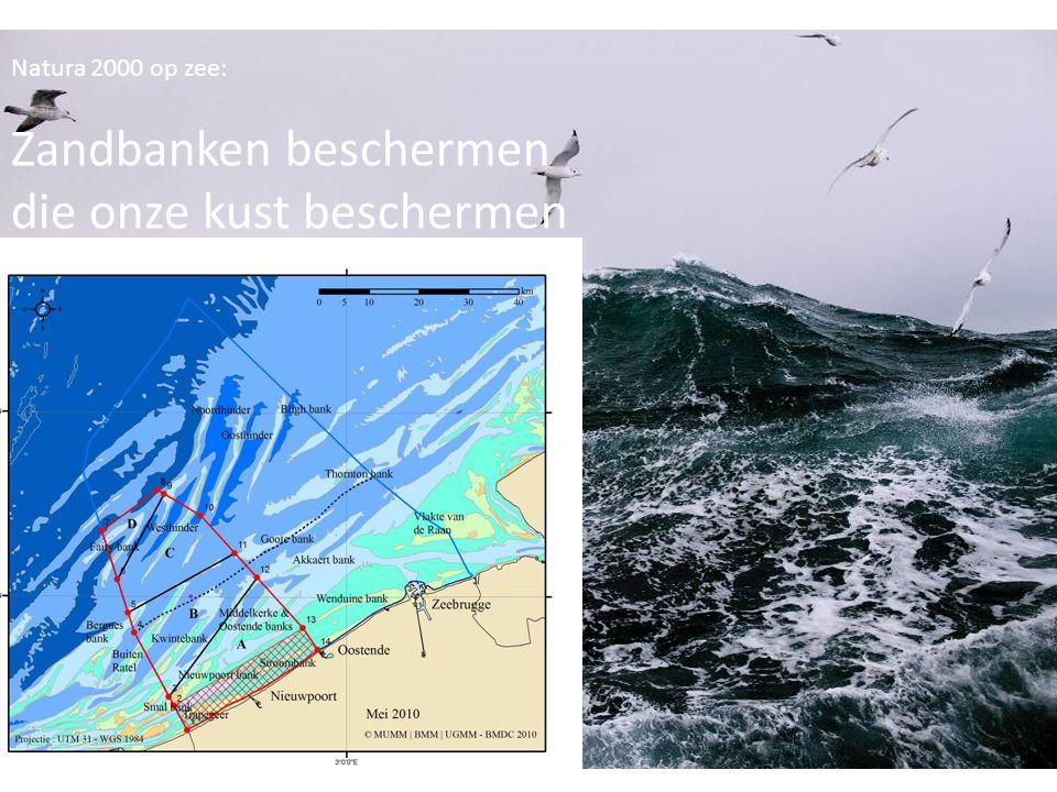 Natura 2000 op zee zandbanken beschermen Natura 2000 op zee: Zandbanken beschermen die onze kust beschermen