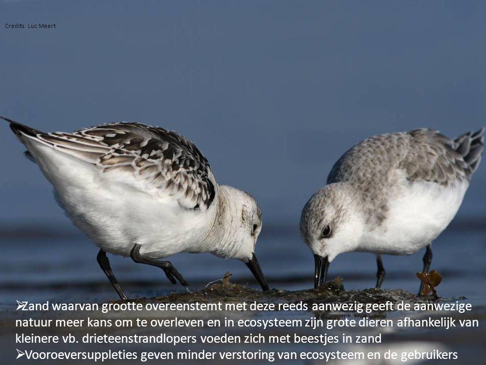  Zand waarvan grootte overeenstemt met deze reeds aanwezig geeft de aanwezige natuur meer kans om te overleven en in ecosysteem zijn grote dieren afh