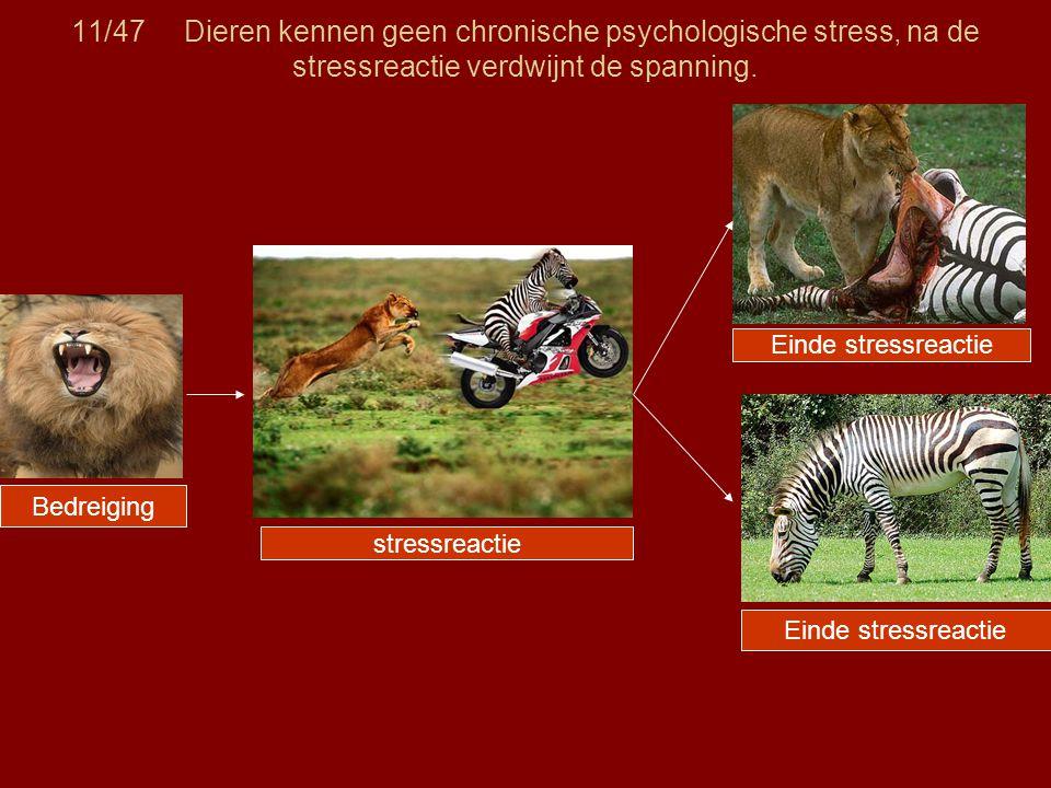 11/47 Dieren kennen geen chronische psychologische stress, na de stressreactie verdwijnt de spanning. Bedreiging stressreactie Einde stressreactie
