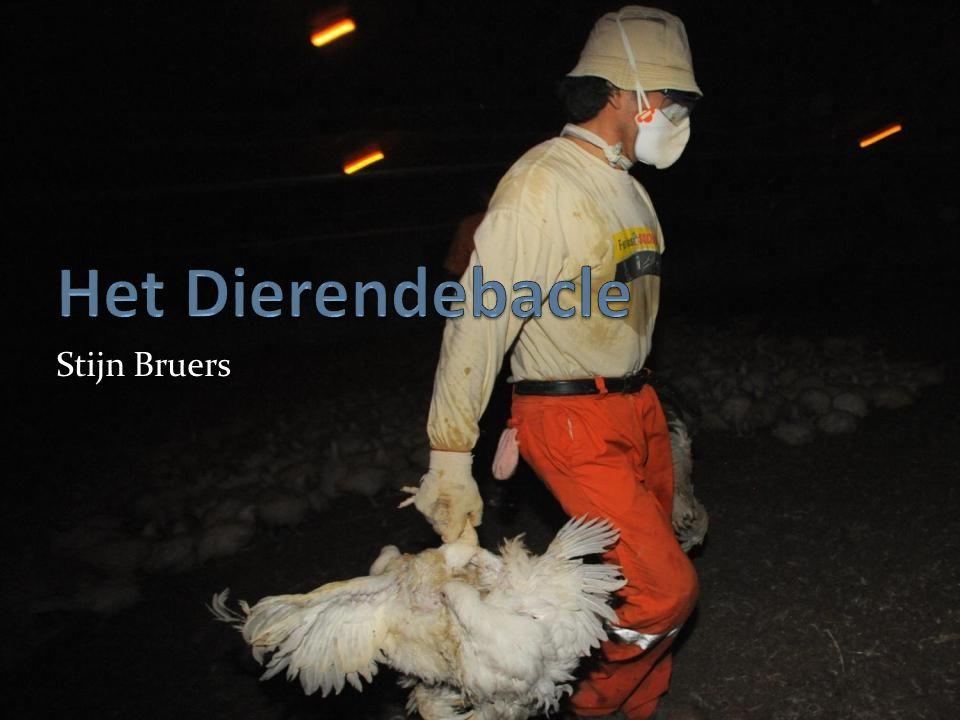 Stijn Bruers