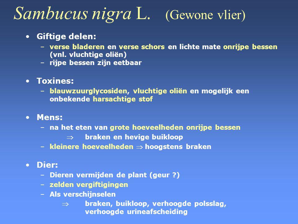 Sambucus nigra L. (Gewone vlier) •Giftige delen: –verse bladeren en verse schors en lichte mate onrijpe bessen (vnl. vluchtige oliën) –rijpe bessen zi