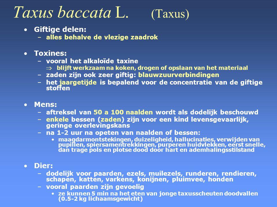 Taxus baccata L. (Taxus) •Giftige delen: –alles behalve de vlezige zaadrok •Toxines: –vooral het alkaloïde taxine  blijft werkzaam na koken, drogen o