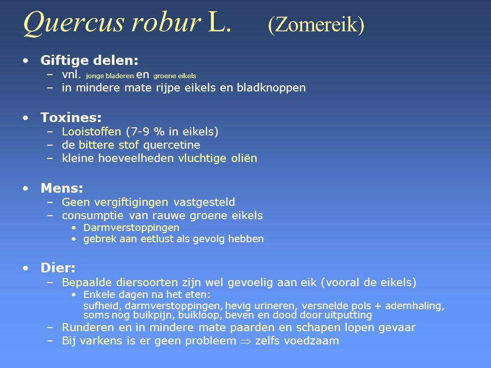 Quercus robur L. (Zomereik) •Giftige delen: –vnl. jonge bladeren en groene eikels –in mindere mate rijpe eikels en bladknoppen •Toxines: –Looistoffen