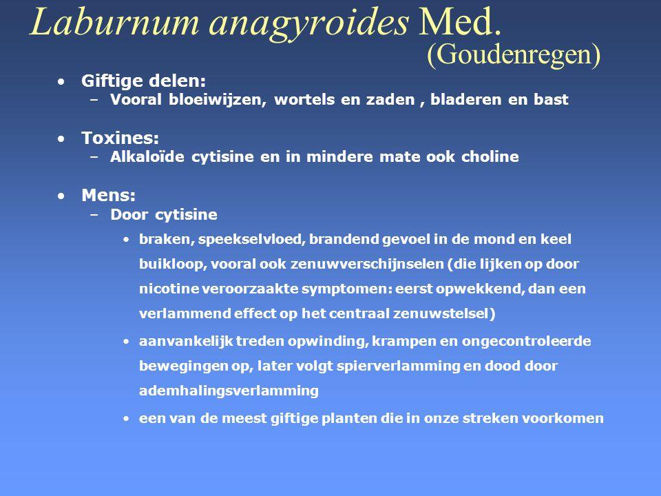 Laburnum anagyroides Med. (Goudenregen) •Giftige delen: –Vooral bloeiwijzen, wortels en zaden, bladeren en bast •Toxines: –Alkaloïde cytisine en in mi
