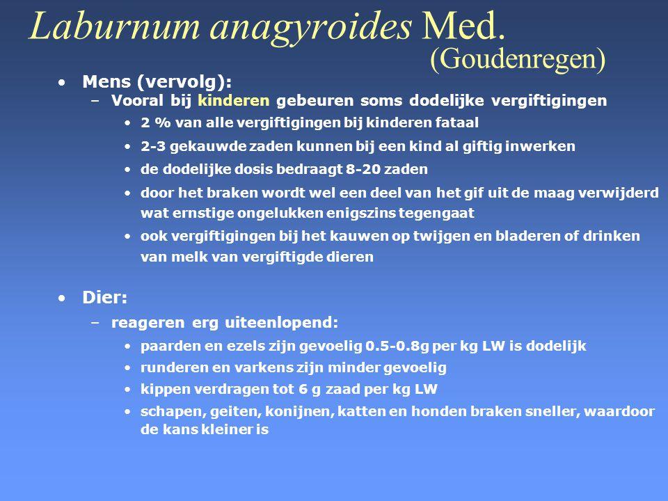 Laburnum anagyroides Med. (Goudenregen) •Mens (vervolg): –Vooral bij kinderen gebeuren soms dodelijke vergiftigingen •2 % van alle vergiftigingen bij