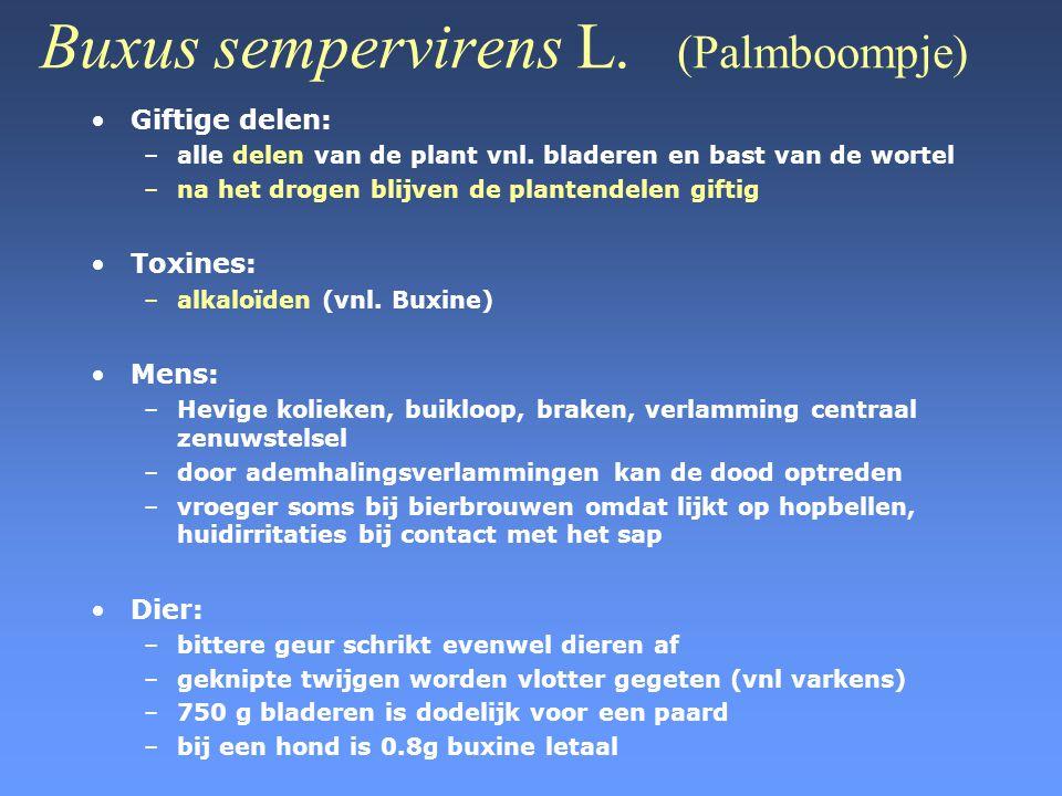 Buxus sempervirens L. (Palmboompje) •Giftige delen: –alle delen van de plant vnl. bladeren en bast van de wortel –na het drogen blijven de plantendele