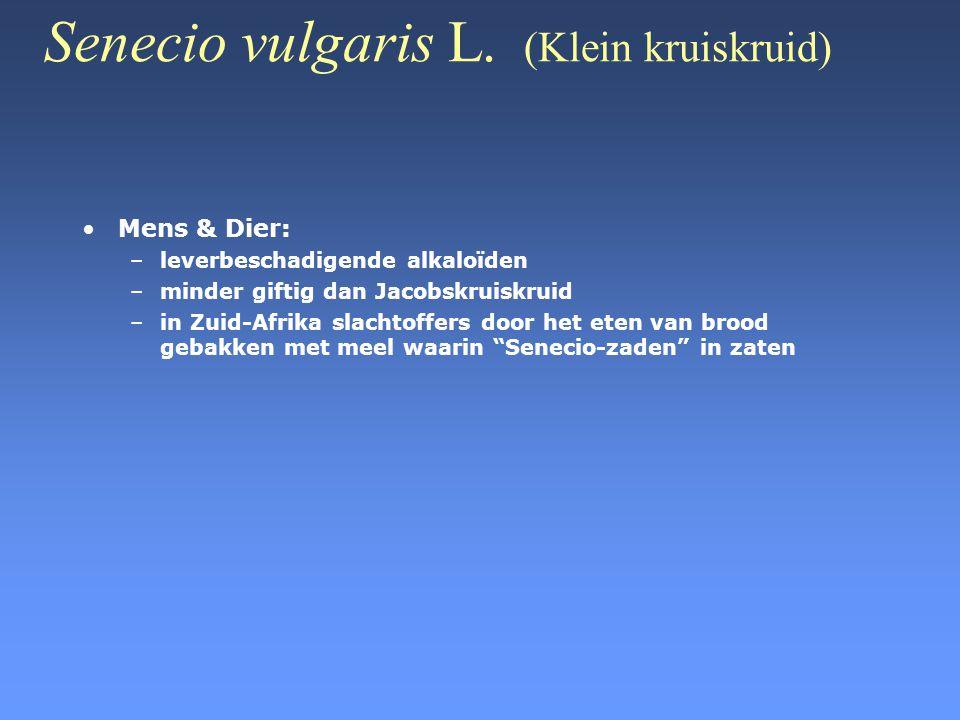 Senecio vulgaris L. (Klein kruiskruid) •Mens & Dier: –leverbeschadigende alkaloïden –minder giftig dan Jacobskruiskruid –in Zuid-Afrika slachtoffers d