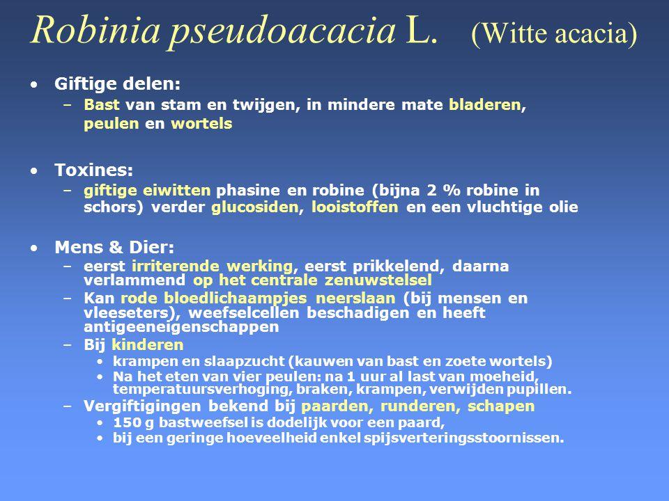 Robinia pseudoacacia L. (Witte acacia) •Giftige delen: –Bast van stam en twijgen, in mindere mate bladeren, peulen en wortels •Toxines: –giftige eiwit