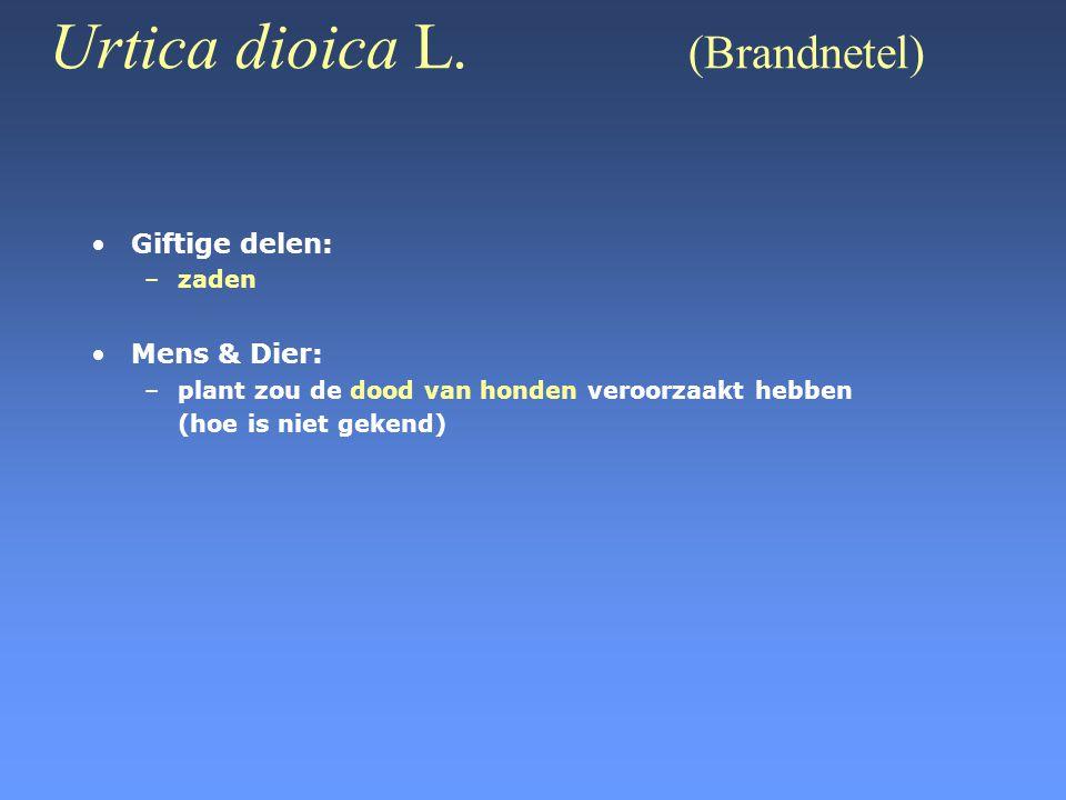 Urtica dioica L. (Brandnetel) •Giftige delen: –zaden •Mens & Dier: –plant zou de dood van honden veroorzaakt hebben (hoe is niet gekend)