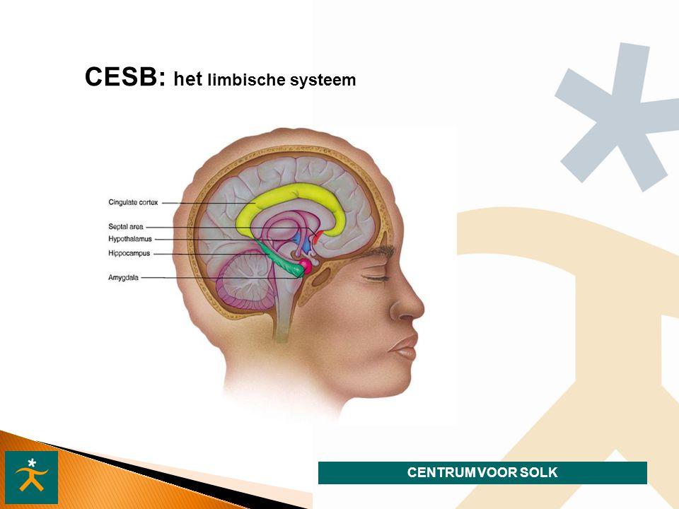 CENTRUM VOOR SOLK CESB: het limbische systeem