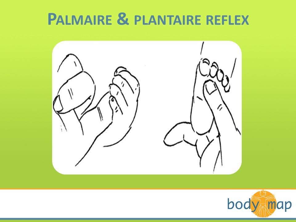P ALMAIRE & PLANTAIRE REFLEX