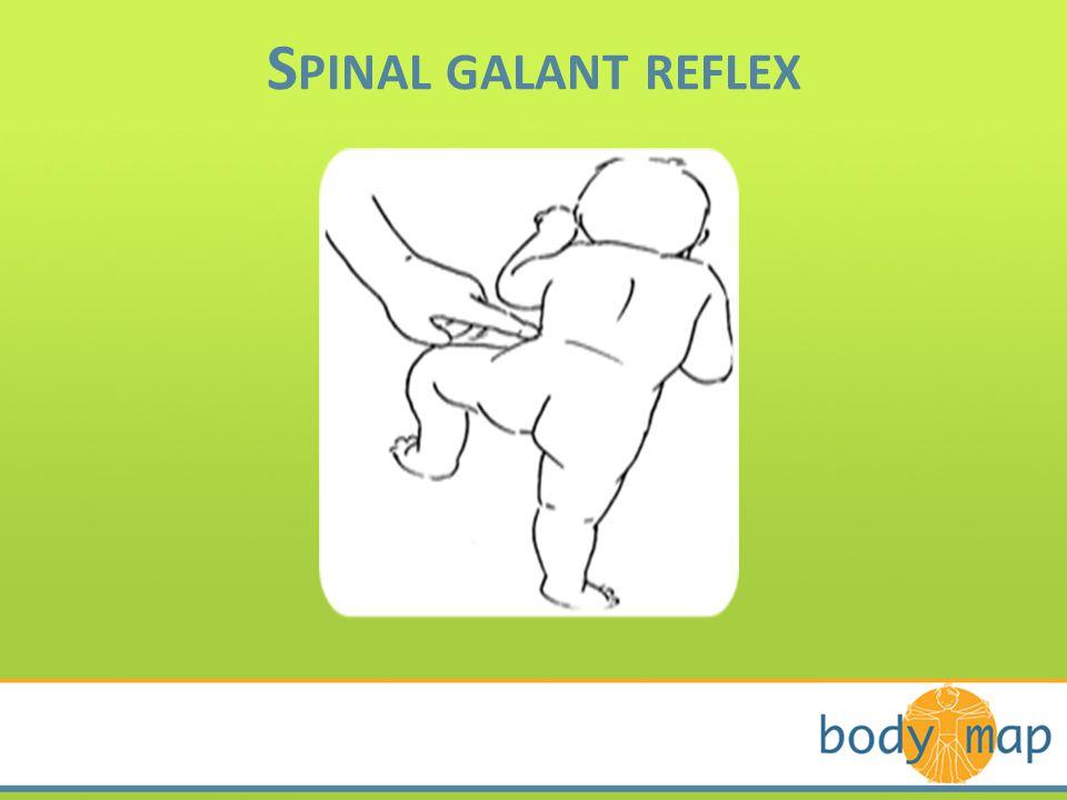 S PINAL GALANT REFLEX