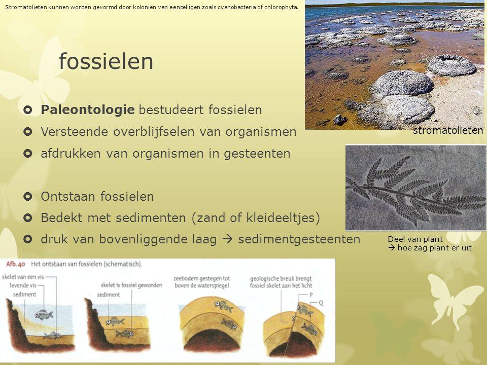 fossielen  Paleontologie bestudeert fossielen  Versteende overblijfselen van organismen  afdrukken van organismen in gesteenten  Ontstaan fossiele