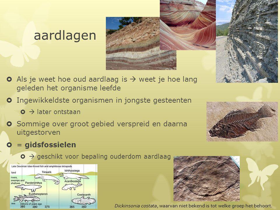 aardlagen  Als je weet hoe oud aardlaag is  weet je hoe lang geleden het organisme leefde  Ingewikkeldste organismen in jongste gesteenten   late