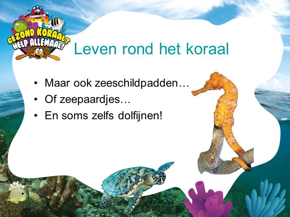 •Maar ook zeeschildpadden… •Of zeepaardjes… •En soms zelfs dolfijnen! Leven rond het koraal